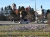 Gdynia miastem kwiatów