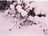 krzaki w śniegu