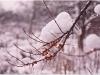 krzaki w sniegu