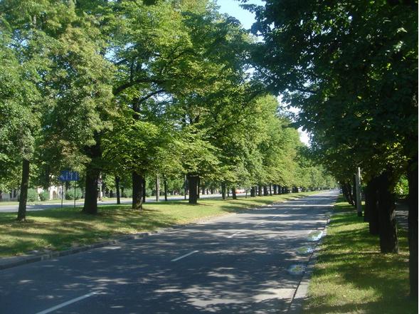 Wielka Aleja w Gdańsku