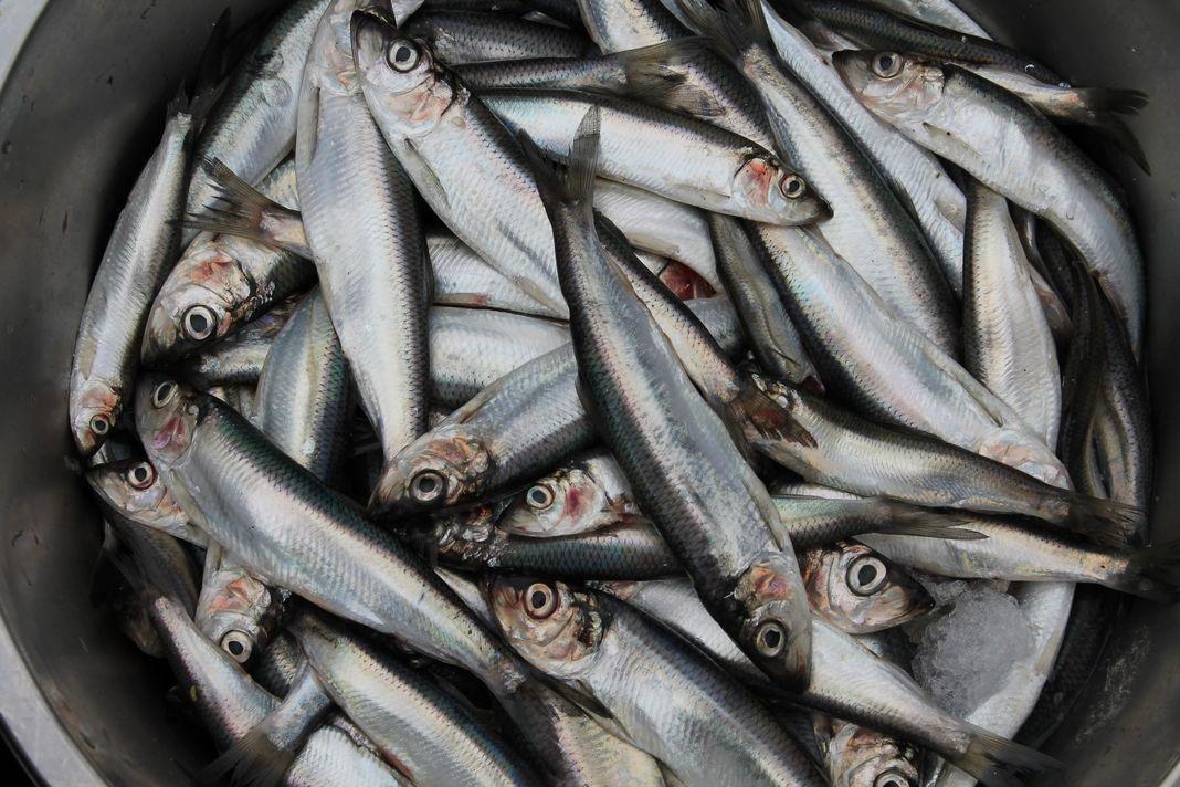 Fischmarkt/ fot. Aleksander Masłowski