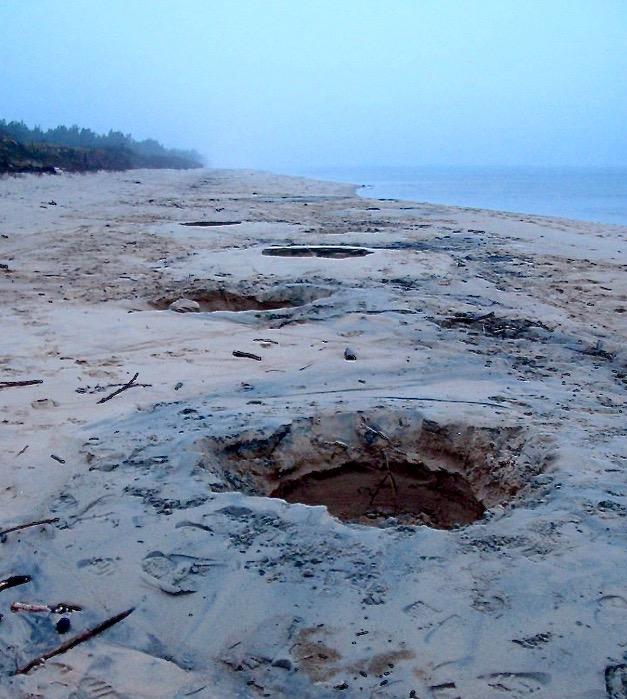 Wyspa Sobieszewska - nielegalne wydobycie bursztynu