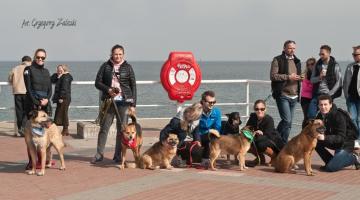Psy nad morzem / Fot. Grzegorz Zaleski