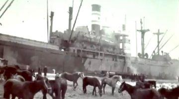 Kowboje morscy w Gdańsku