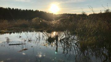 """Spacer wzdłuż granicy użytku ekologicznego """"Łozy w Kiełpinie"""""""