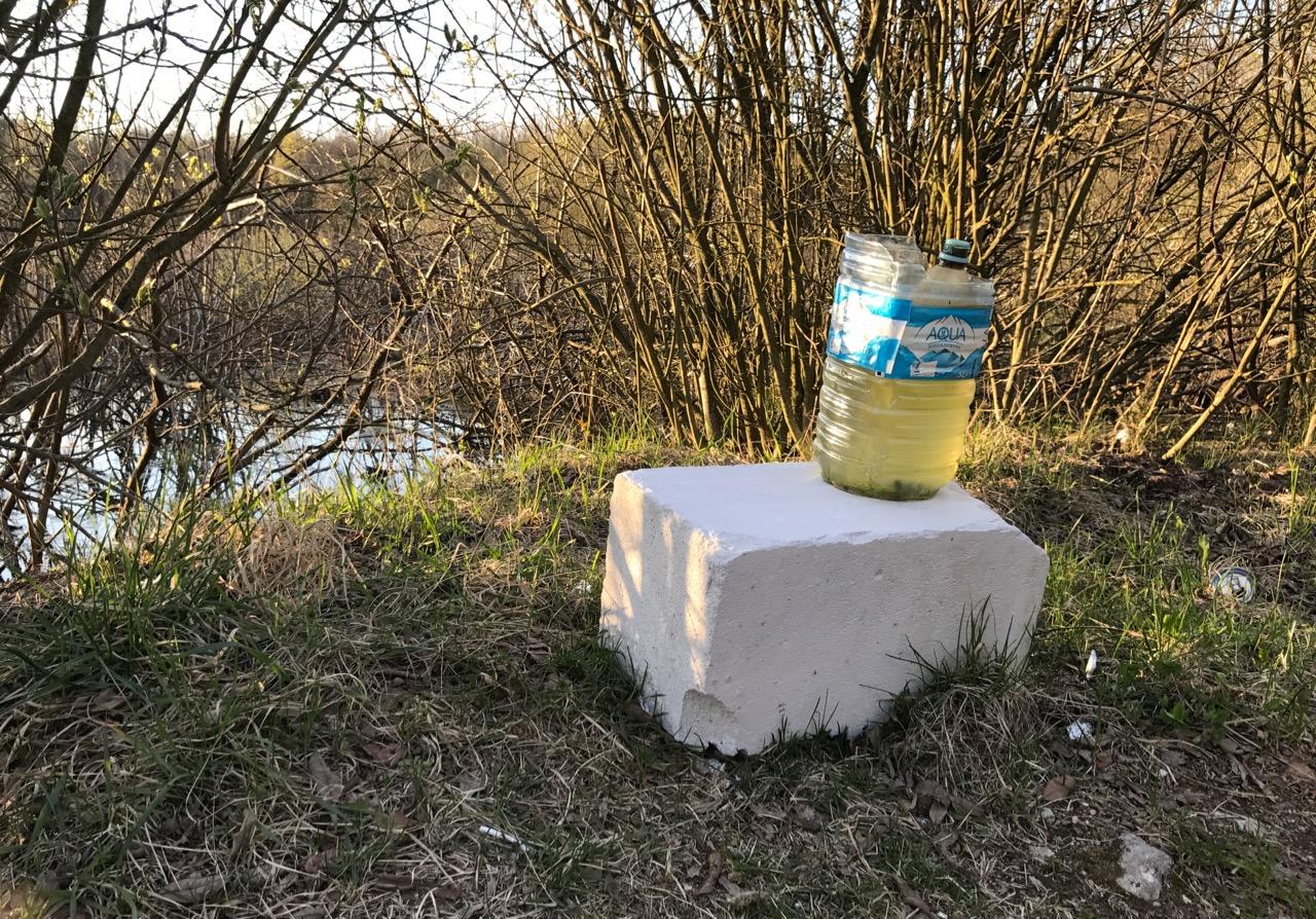 Łozy w Kiełpinie