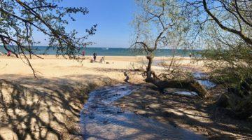 Wzdłuż potoku Swelina (Swelinia). Pomysł na spacer w Gdyni (i Sopocie)