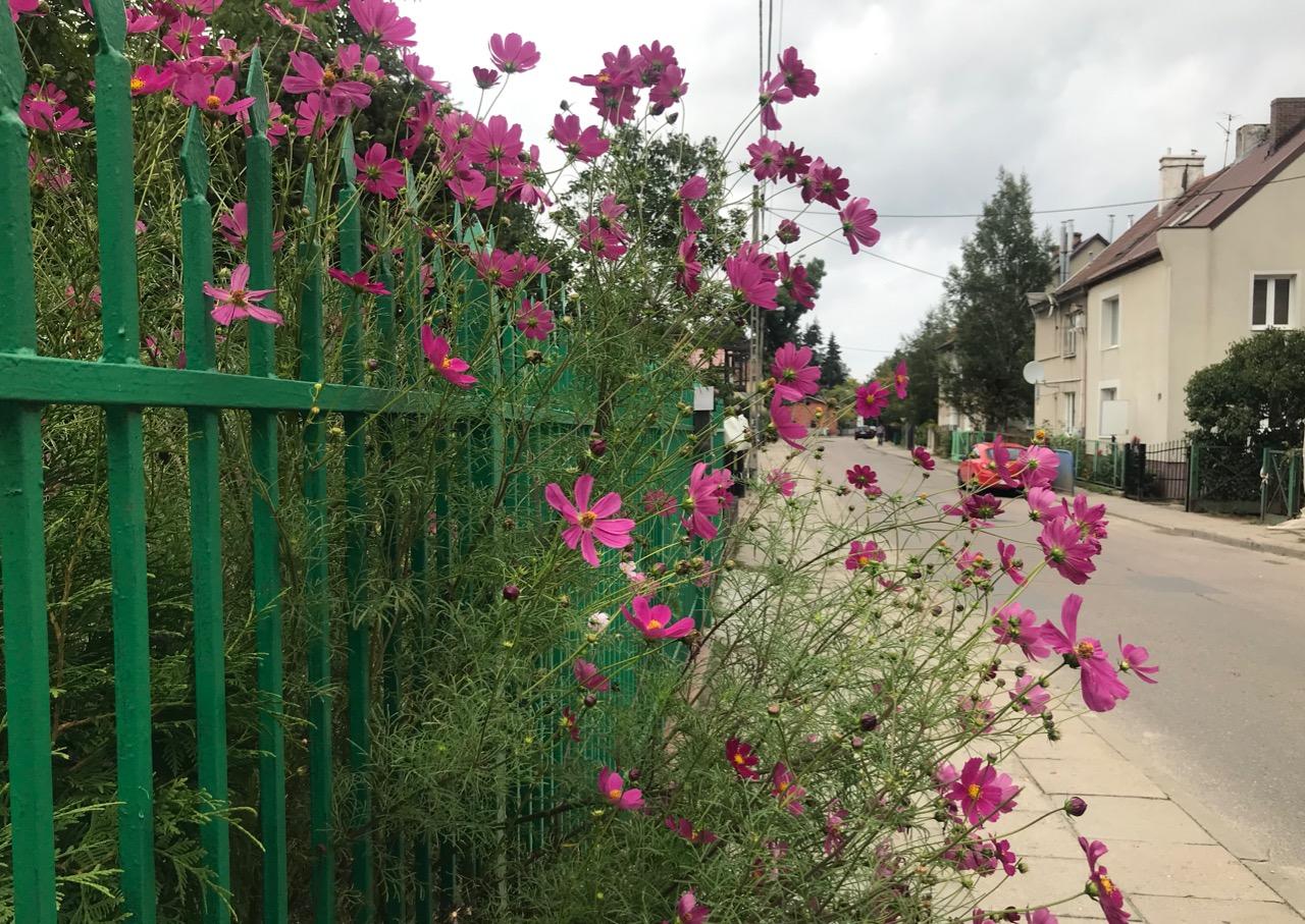 Ulica Nowiny